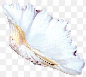 Seashell - Seashell Shankha Mollusc Shell Clip Art PNG