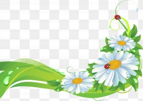 Camomile - Flower Picture Frames Stock Photography PNG