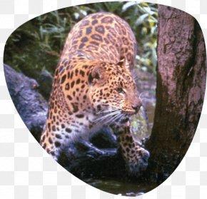 Cat Park - Leopard Great Cats World Park Jaguar Cheetah Whiskers PNG