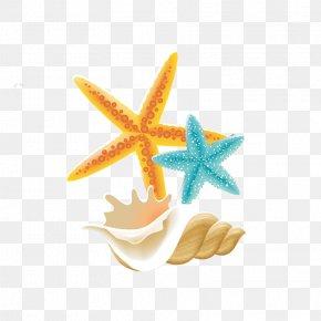 Summer Theme,Summer Promotion,Icy Summer,Blue Sky,Baiyun,sunlight,hot Air Balloon,Spray,Starlight,starfish,glacier,seawater - Starfish PNG