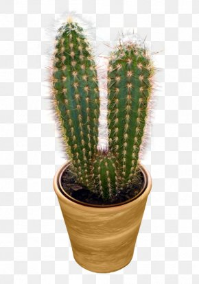 Cactus Image - Cactaceae Icon PNG