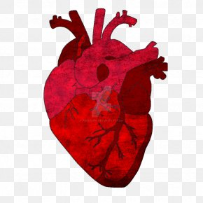 Heart - Gray's Anatomy Saatchi Art Heart PNG