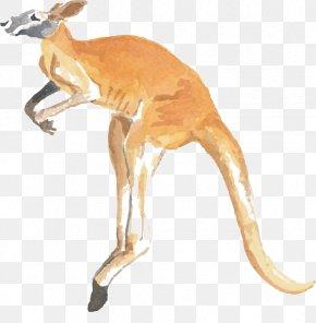 Kangaroo - Kangaroo Word Macropodidae Koala Jumping PNG