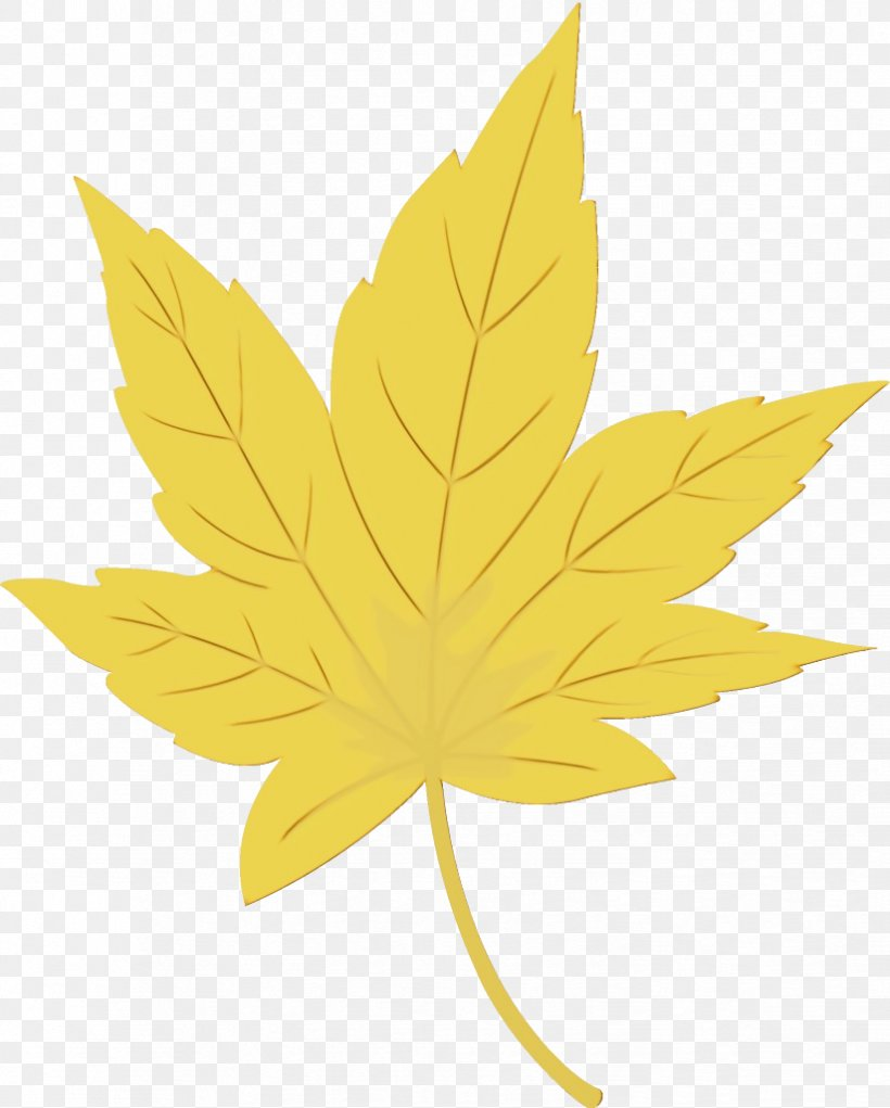 Maple Leaf, PNG, 824x1026px, Watercolor, Black Maple, Flower, Leaf, Maple Leaf Download Free