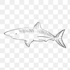 Hand-painted Tiger Vector - Tiger Shark Squaliformes /m/02csf Line Art Drawing PNG