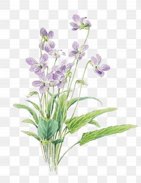 Bellflower Bellflower Family - Flower Flowering Plant Plant Violet Cut Flowers PNG