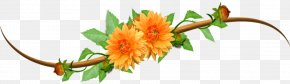 Twining Vines Orange Flowers - No Orange Clip Art PNG