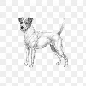 Dog - Dog Breed Companion Dog Paw PNG