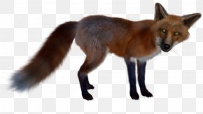 Fox - Red Fox Arctic Fox PNG