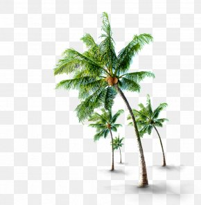 Coconut Tree Material - Coconut Tree If(we) PNG