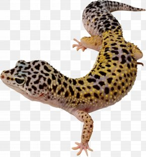 Lizard - Common Leopard Gecko Lizard East Indian Leopard Gecko Clip Art PNG