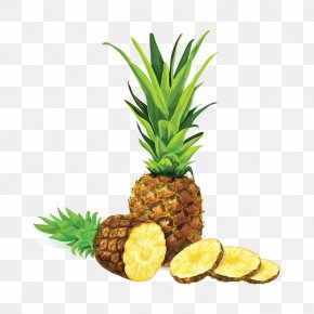 Pineapple Illustration Vector - Pineapple Drawing Royalty-free Illustration PNG