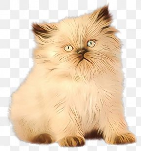 Munchkin Norwegian Forest Cat - Asian People PNG