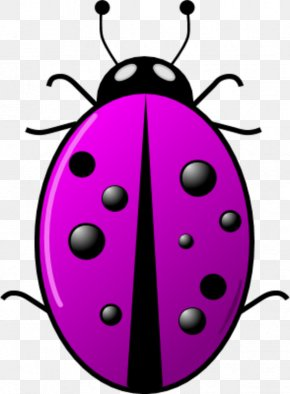 Surveillance Camera Clipart - Beetle Ladybird Clip Art PNG