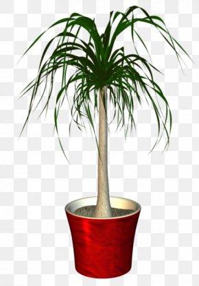 Plant - Flowerpot Houseplant Clip Art PNG