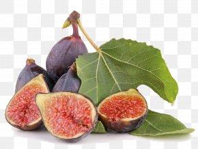 Fig Leaf - Common Fig Fig Leaf Stock Photography PNG
