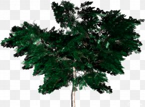Vigor Green Trees Pictures - Tree Forest Woody Plant Clip Art PNG