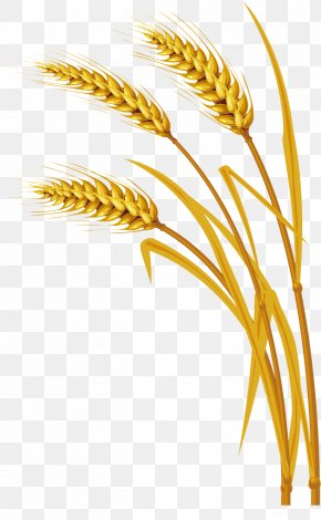 Wheat Elements - Wheat Ear Clip Art PNG