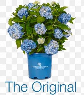 Hydrangea - French Hydrangea Flower Shrub Shade Garden PNG