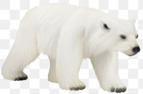 Polar Bear Photos - Polar Bear Bird Animal Clip Art PNG