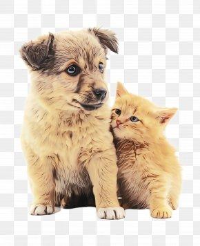 Dog Breed Kitten - Cat Puppy Dog Kitten Dog Breed PNG