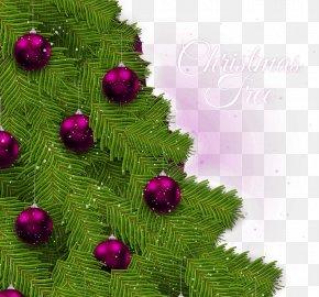 Beautiful Christmas Tree Greeting Card - Christmas Tree Greeting Card PNG
