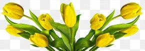 Tulip - Cut Flowers Easter Bunny Flower Bouquet PNG