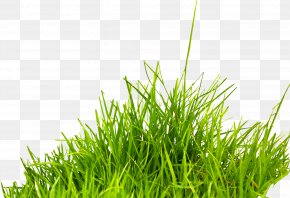 Grass Image, Green Grass Picture - Summer Information Icon PNG