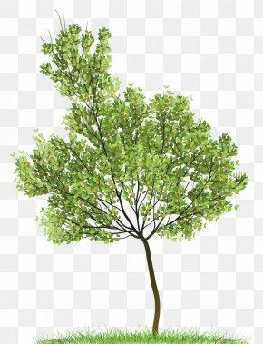 Green Tree - Tree Clip Art PNG