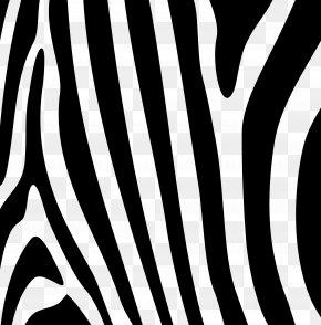 Zebra - Zebra Gratis PNG
