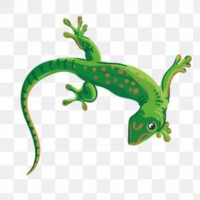 Vector Green Gecko - Reptile Lizard Chameleons Euclidean Vector Illustration PNG