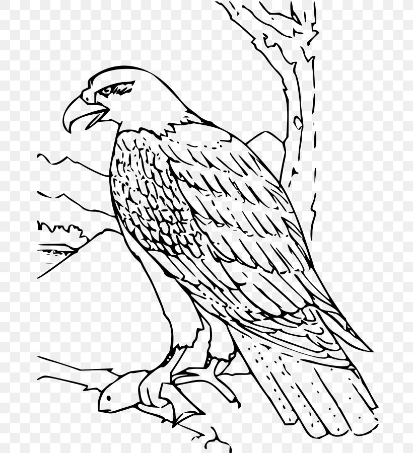 Bald Eagle Coloring Book Bird Drawing, PNG, 692x900px, Bald ...