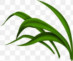 Green Grass - Green Download Clip Art PNG