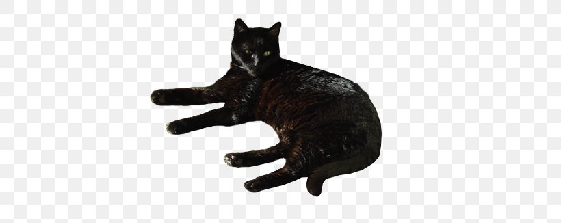 black cat domestic short haired cat bombay cat whiskers desktop wallpaper png favpng yVZsPyySEwtvgwZMDjWW74TG1