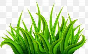 Grass Green Clip Art Image - Download Clip Art PNG