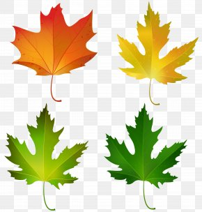 Fall Maple Leaves Set Decorative Clipart Image - Maple Leaf Autumn Leaf Color Sugar Maple Clip Art PNG