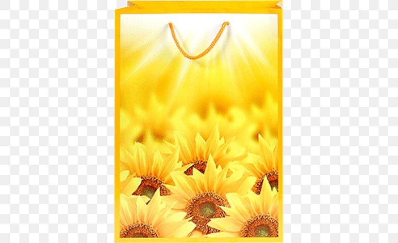common sunflower desktop wallpaper high definition television image file formats png favpng B7k6vbMVw8piNeWGzqAmk1m4a