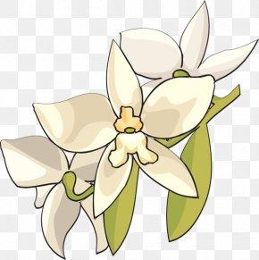 Flowers Clipart Background png download - 732*453 - Free Transparent Floral  Design png Download. - CleanPNG / KissPNG