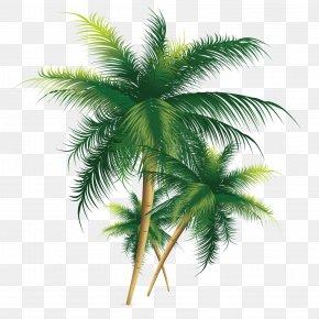 Exquisite Coconut Tree - Coconut Tree PNG