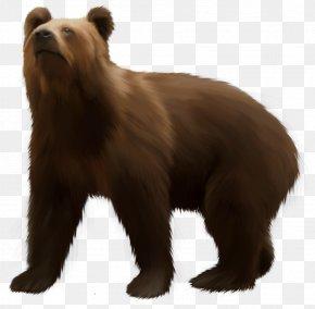 Bear - Grizzly Bear American Black Bear Brown Bear Clip Art PNG