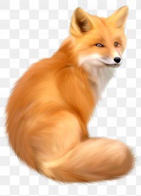 Fox - Red Fox Clip Art PNG