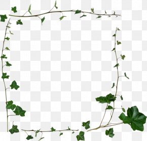 Pearls And Ivy - Borders And Frames Clip Art Stock Photography Image PNG