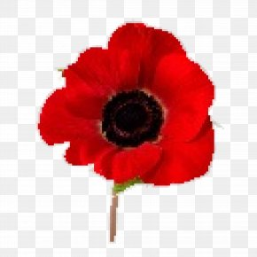 Red Poppy - In Flanders Fields Remembrance Poppy Armistice Day Lest We Forget PNG