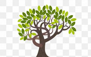 Tree - Tree Curve Illustration PNG