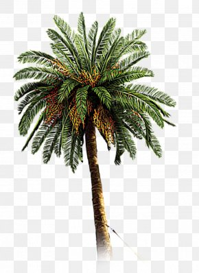 Hand-painted Coconut Trees - Sweeter Dreams Album Pop Rocks Spotify Habaesha PNG