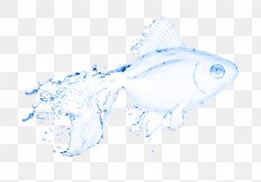 Transparent Fish - Water Fish Stock Photography Illustration PNG