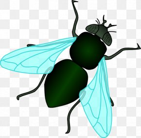 Housefly Cliparts - Fly Clip Art PNG