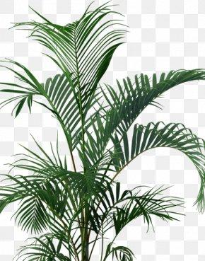 Vase - Tree Flowerpot Houseplant Arecaceae PNG