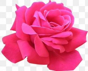 Clip Art - Rose Pink Flowers Clip Art PNG