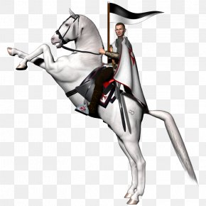 Rearing Horses Pictures - Arabian Horse Rearing Knights Templar Clip Art PNG